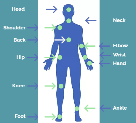 Body Parts Illustration.PNG