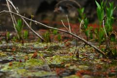 _Swamp_.jpg