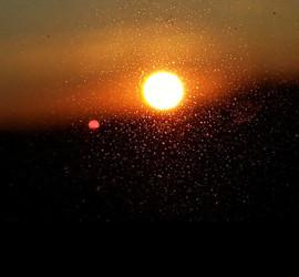 _Sunset Glare_.jpg