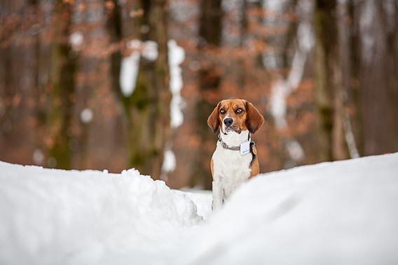 Hundeshooting im Winter
