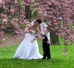 Couple under blossom