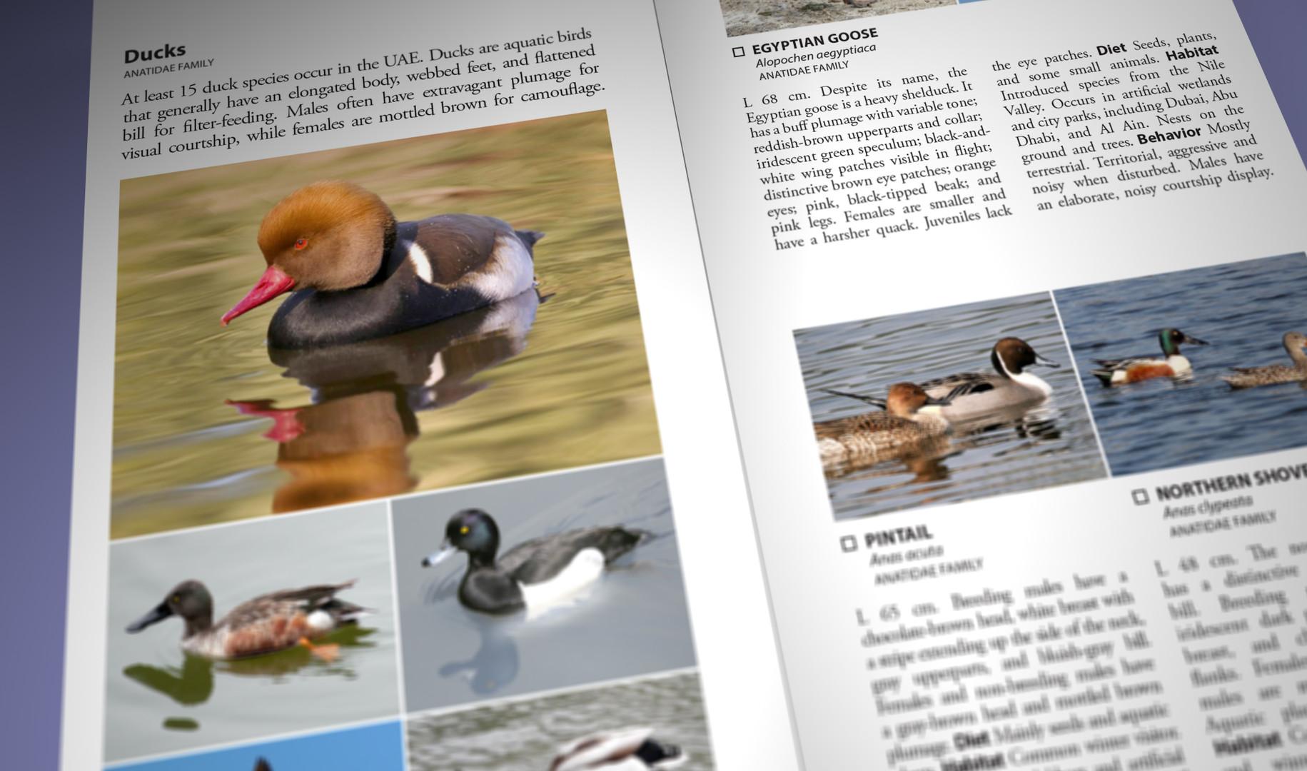 Still Pages 3D 14 (0-00-03-09).jpg