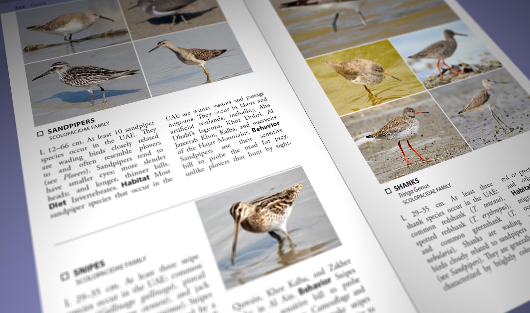 Still Pages 3D 15 (0-00-03-06).jpg