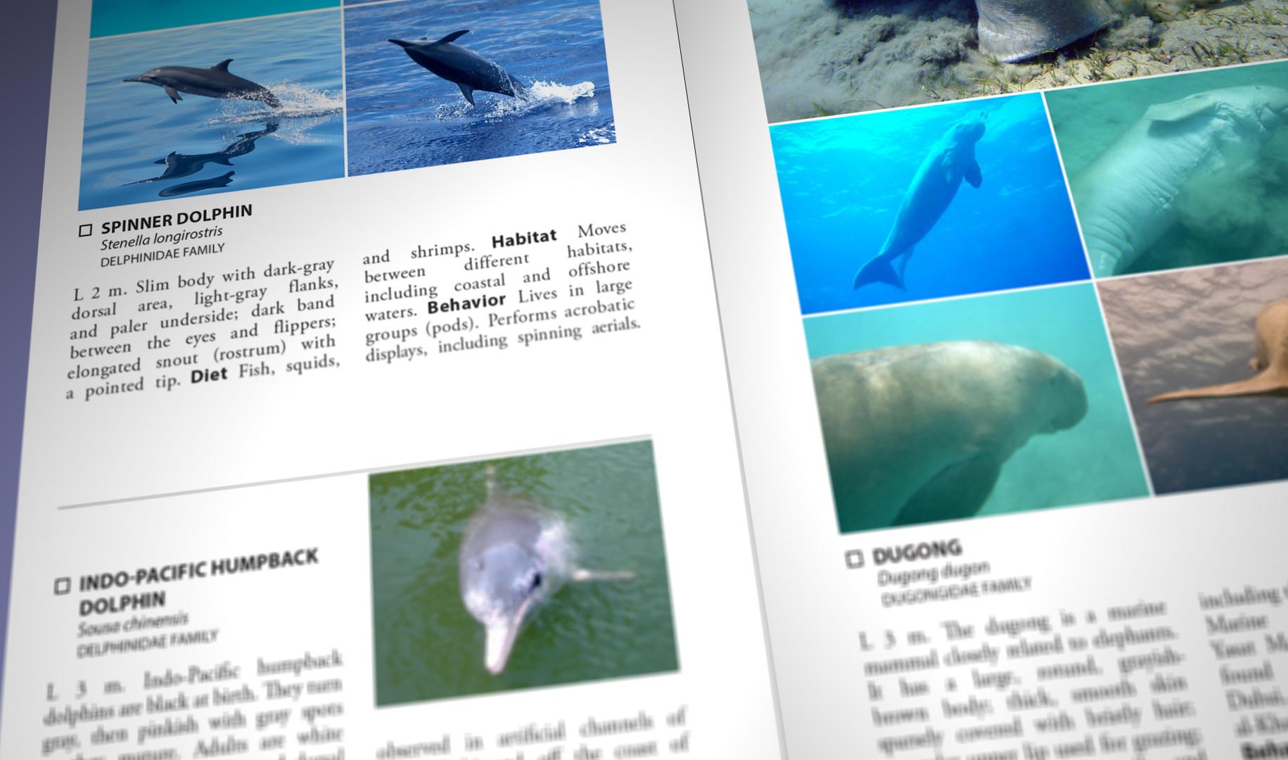 Still Pages 3D 17 (0-00-03-09).jpg