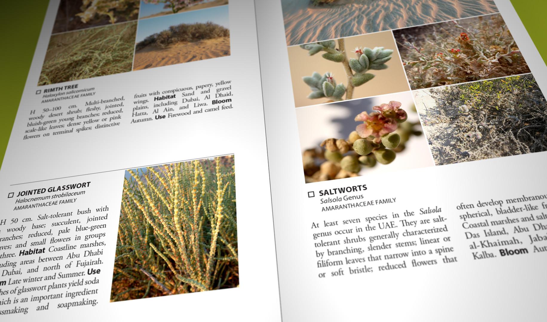 Still Pages 3D 9 (0-00-03-09).jpg