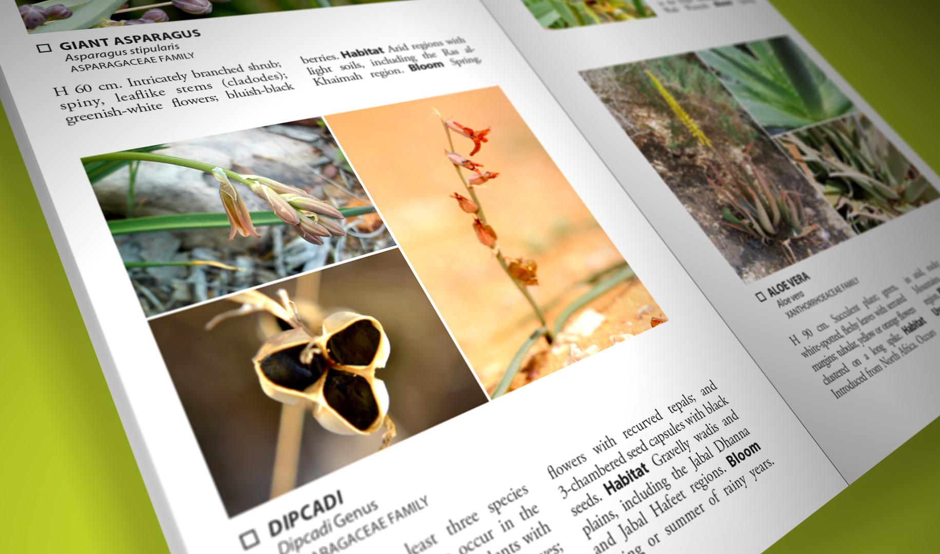 Still Pages 3D 8 (0-00-02-05).jpg