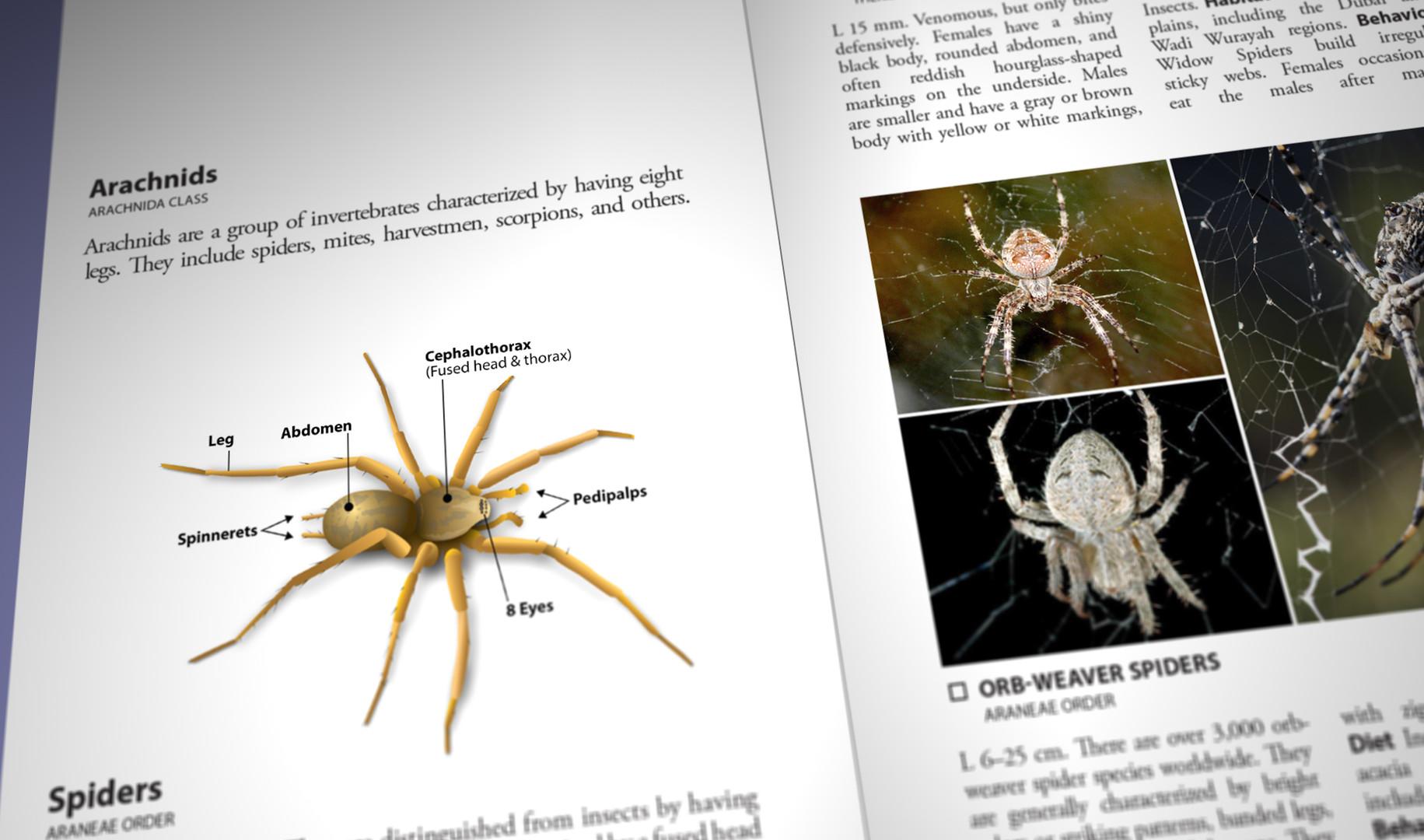 Still Pages 3D 11 (0-00-03-09).jpg