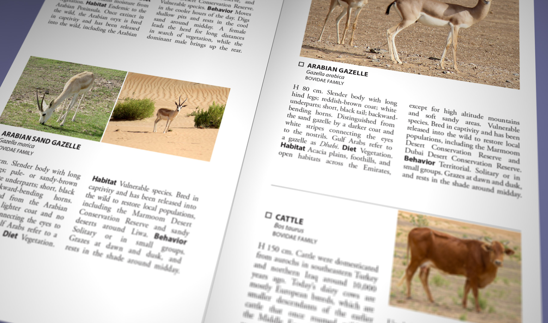 Still Pages 3D 16 (0-00-03-06).jpg