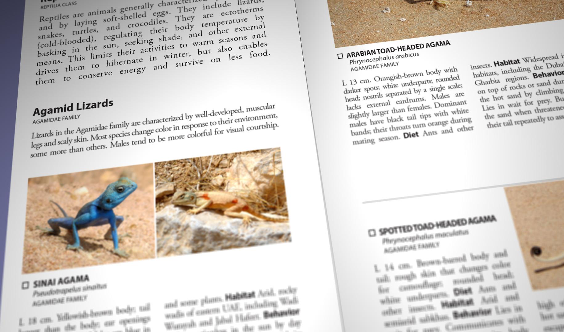 Still Pages 3D 13 (0-00-03-09).jpg