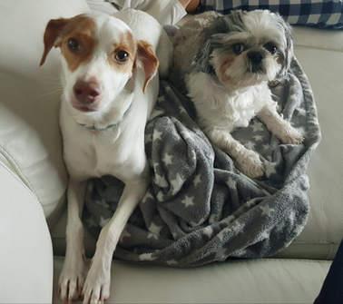 Molly y Pou