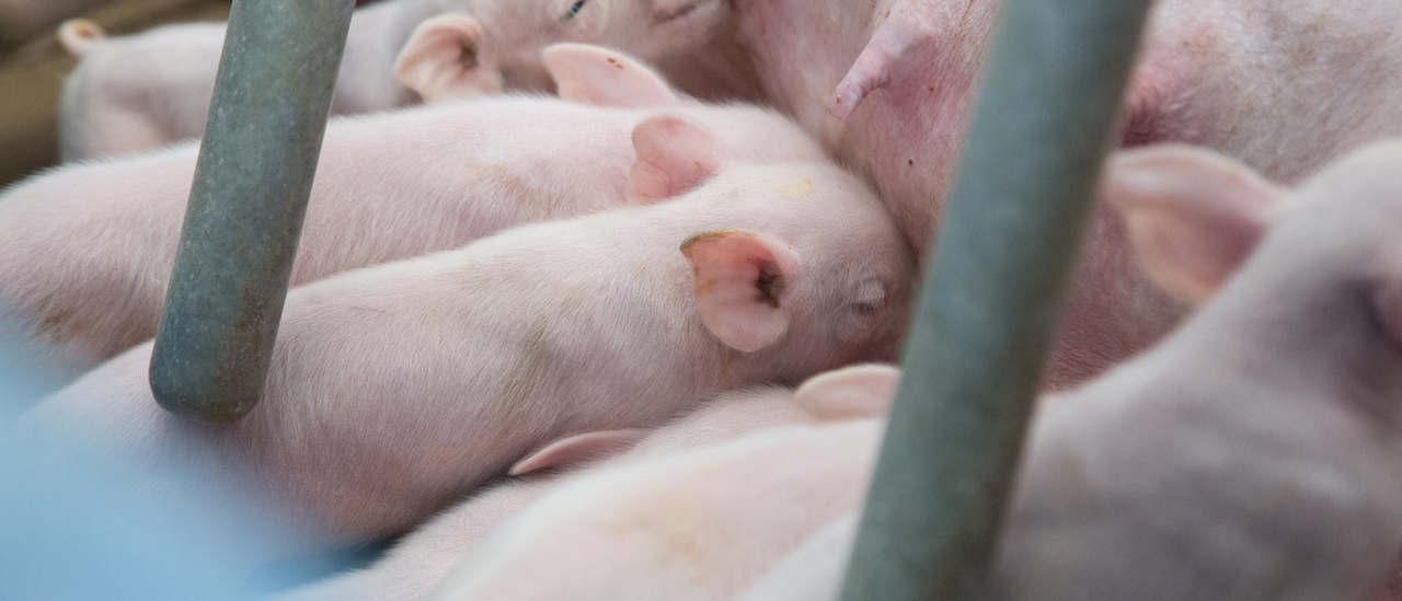Tiergesundheit ist oberstes Gebot.