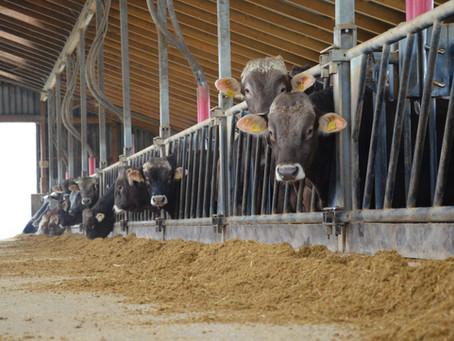 Borchert Kommission – Das Kompetenznetzwerk Nutztierhaltung