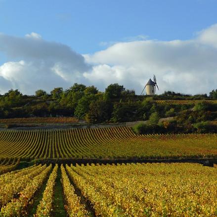 Vignobles au Patrimoine mondial