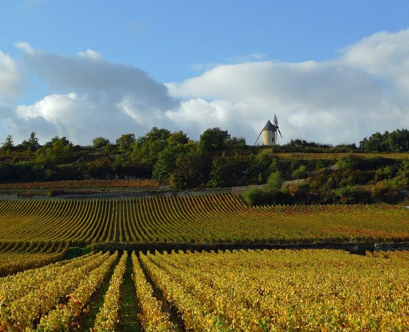 Les Climats du vignoble de Bourgogne - Santenay