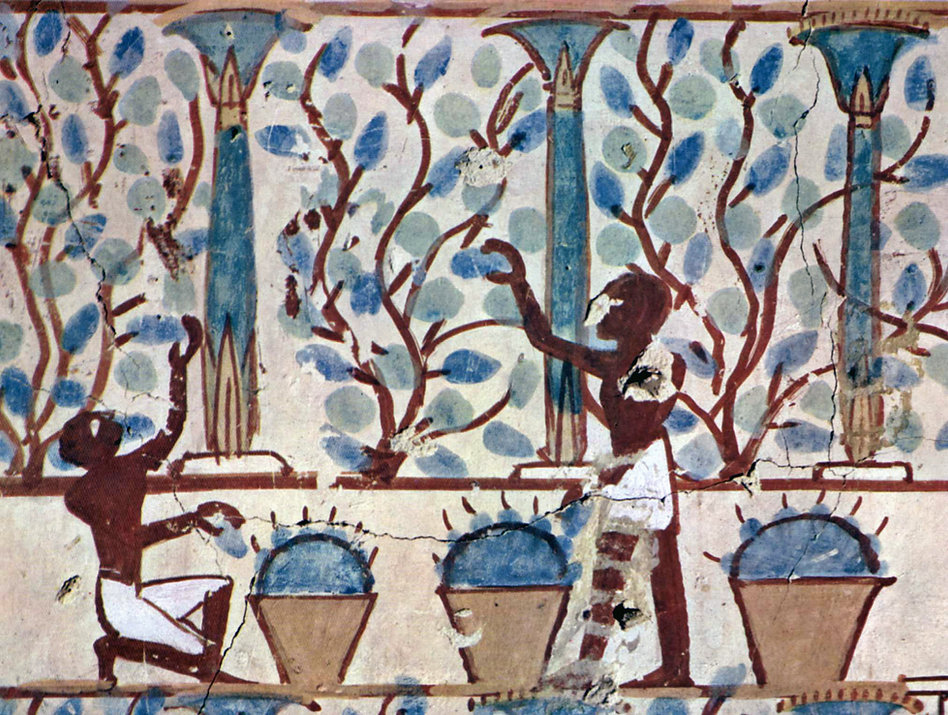 Grape Harvest, Tomb of Nebamun - Valley of the Nobles, Egypt | Vitual Wine Museum: Wine and the Arts, Painting