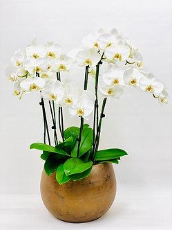 Topf für Pflanzen ( Orchidee zusätzlich erhältlich)