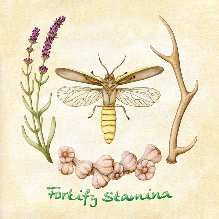 Fortify Stamina