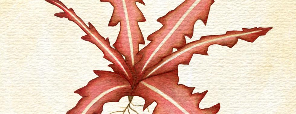 Crimson Nirnroot