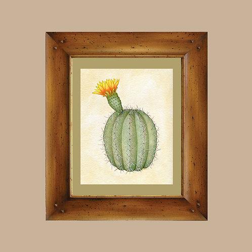 Barrel Cactus in Bloom - Arizona Sonoran Desert Cacti Art Print