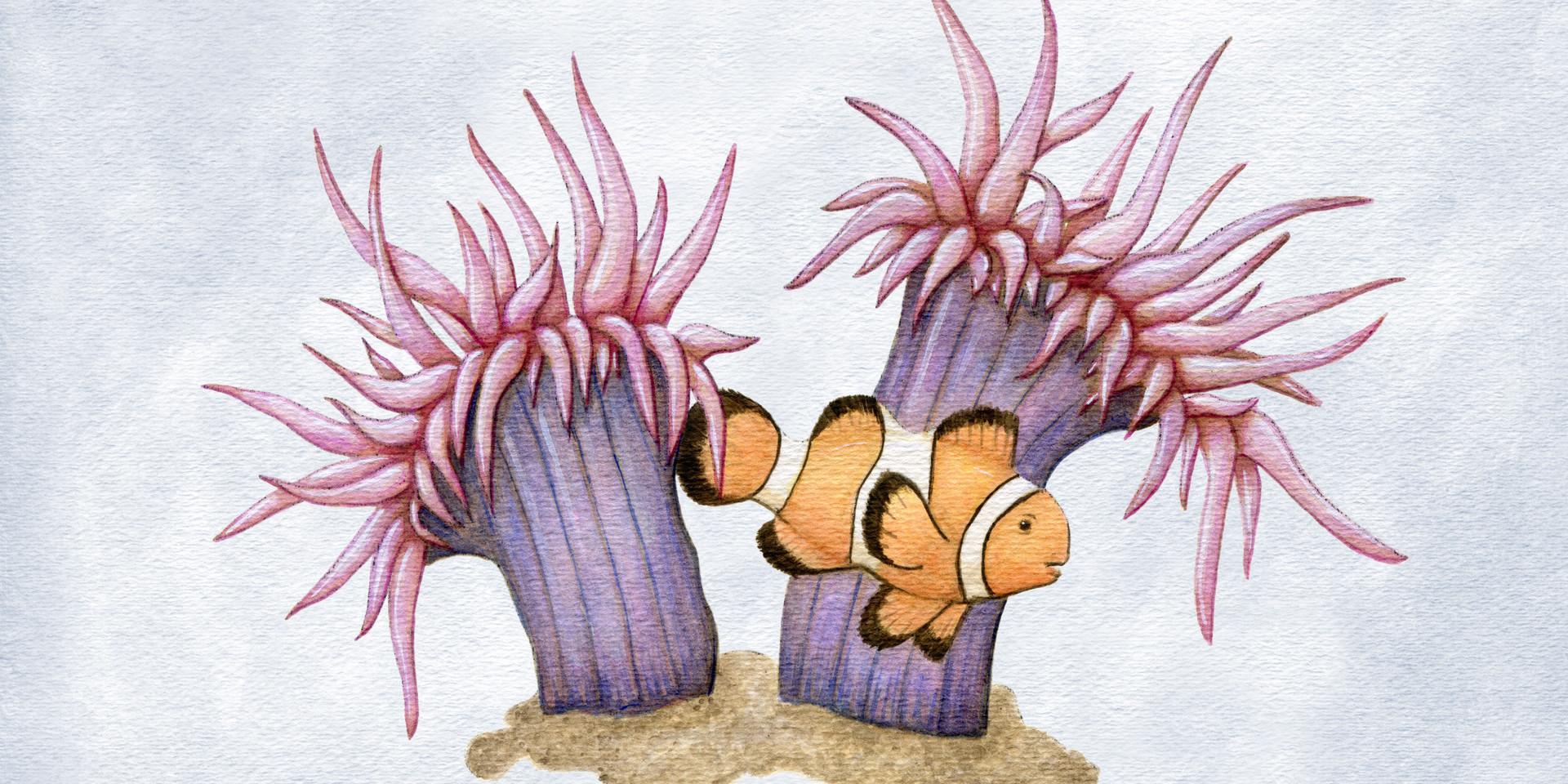 Sea Anemones and Clown Fish