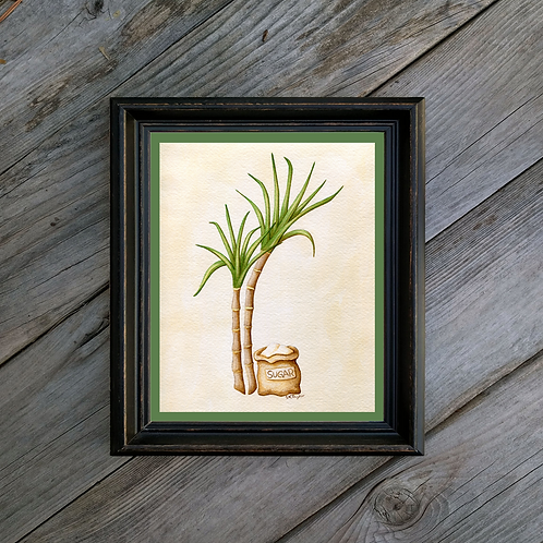 Rum Sugarcane Art Print - Vintage Inspired Botanical Illustration