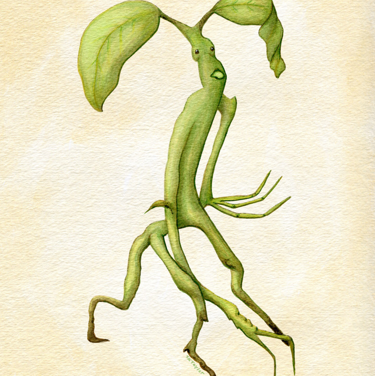 Pickett the Bowtruckle
