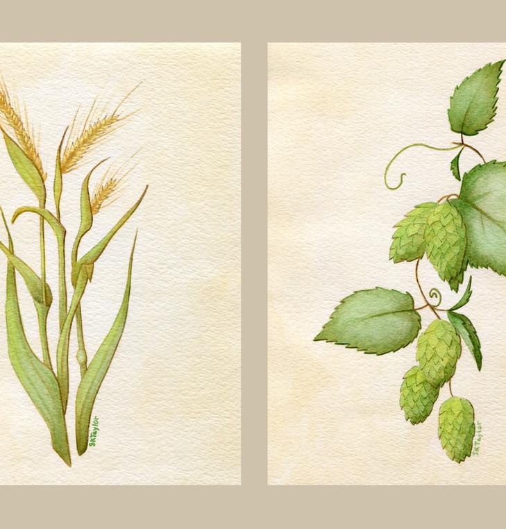 Barley and Hops