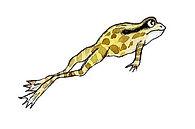 Frog__#watercolor #akvarell #frog #frosk