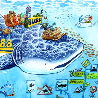 Whale shark bus driver