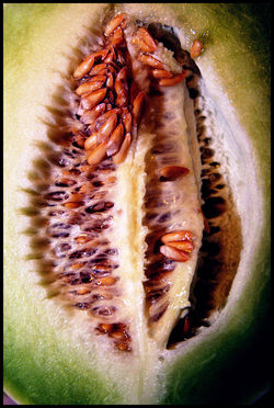 Melon3c