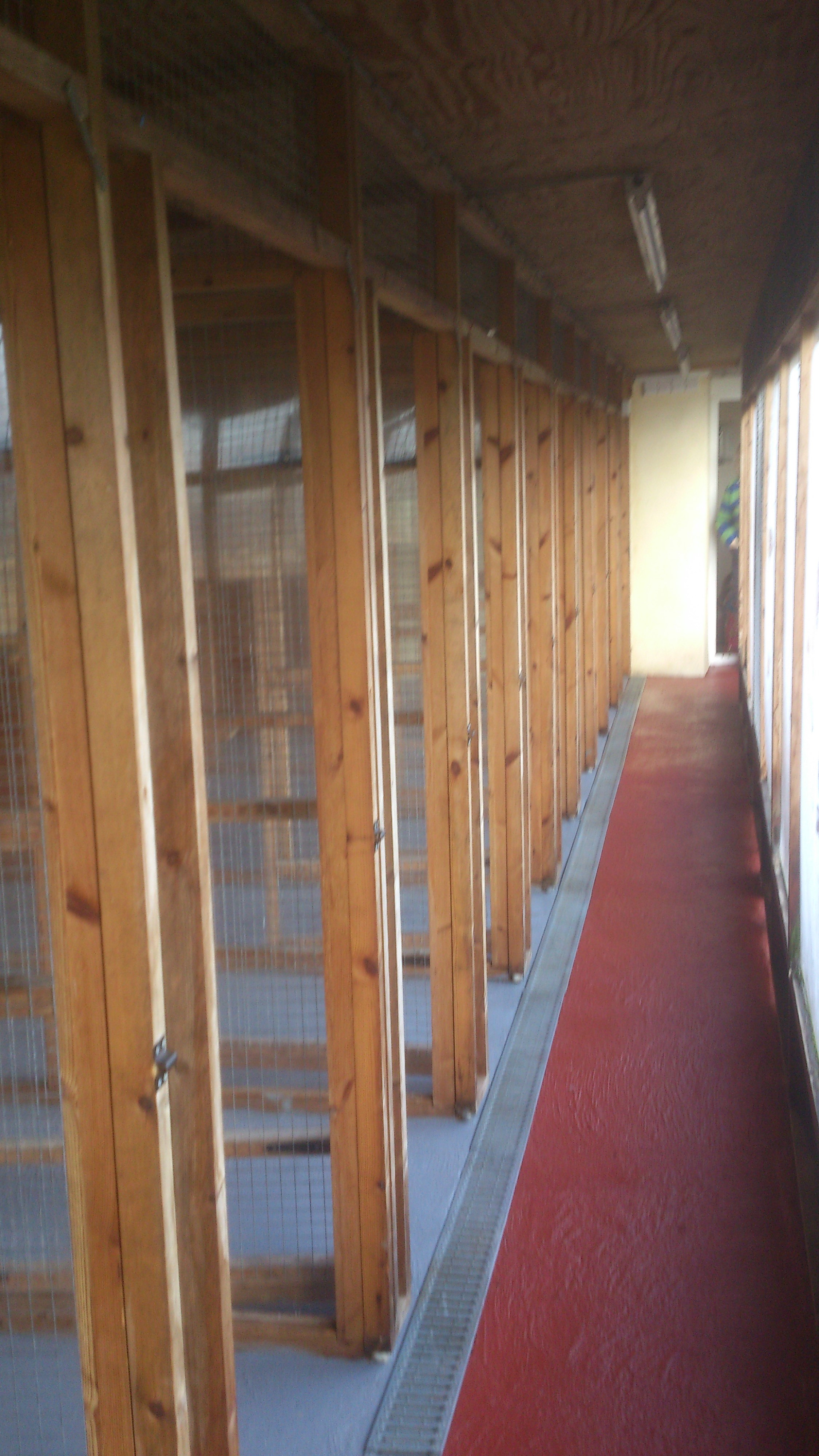 View inside our main cattery