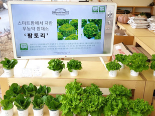 EZ Farms, South Korea