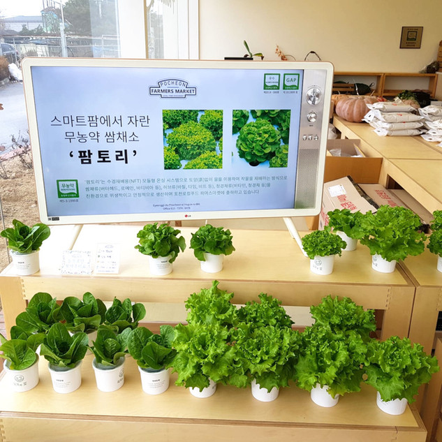 Tapkit lettuces with roots on display