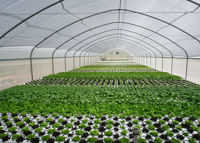 TAPKIT_greenhouse_1.jpg