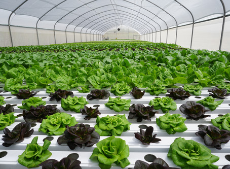 TAPKIT: a 500m2 self-assemble hydroponic greenhouse