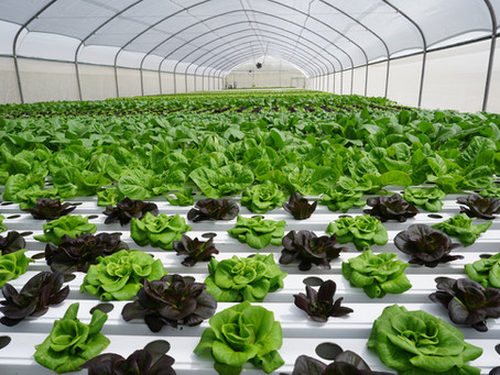 TAPKIT: a 500m2 self-assemble hydroponic greenhouse