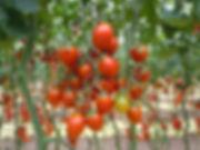 Postharvest Hub - Sustainable agriculture