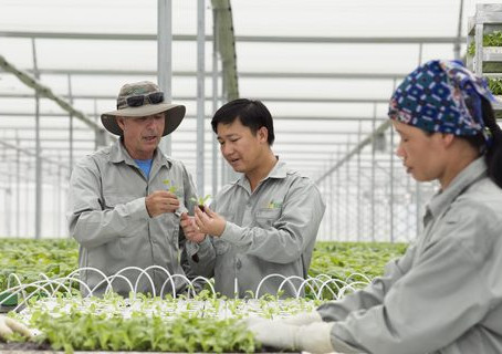 Hi-tech farms offer a vision of the future, today
