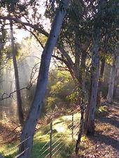 Morning Light 2.jpg