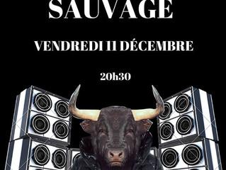 Boeuf Sauvage vendredi 11 Décembre