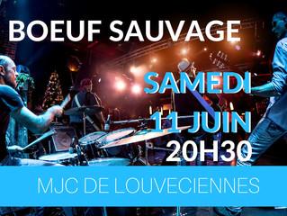 Boeuf sauvage samedi 11 Juin