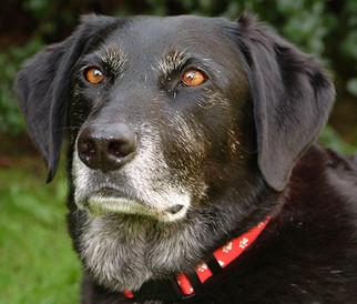 London Based Dog Photography