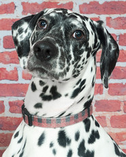 Dog and Pet Photography in North London