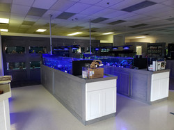Our saltwater section, with two large coral tanks and many saltwater fish and invertebrate tanks.