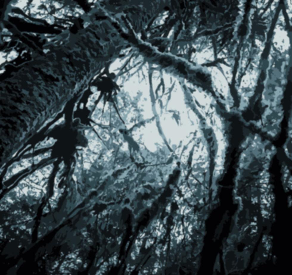 TREES11x14.jpg