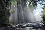 forest-road-landscape_G1K9ocSO.jpg