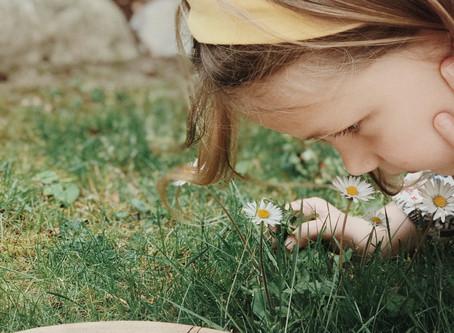 Gänseblümchen - bei Schwangerschaftsstreifen und Akne? Anleitung für ein heilendes Öl