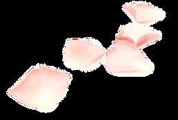 rosepetals_edited_edited_edited_edited_e