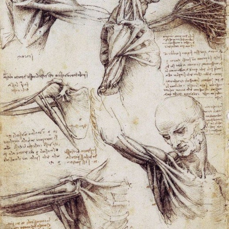 Art and Science: The Rhizome and Leonard Da Vinci