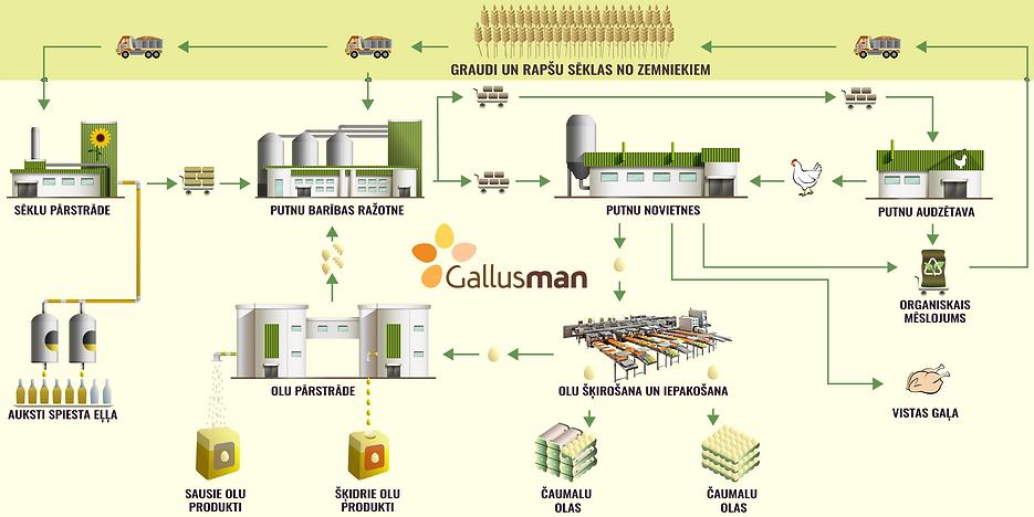 Gallusman_cycle.png